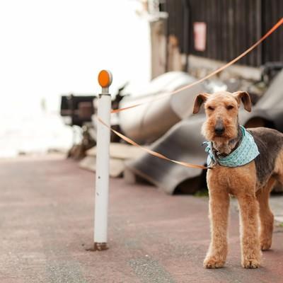 「飼い主を待つ犬」の写真素材