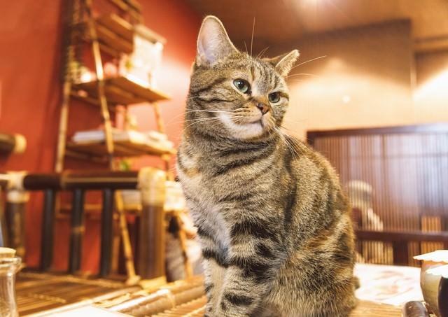 お座りする猫ちゃんの写真