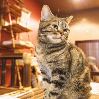 「お座りする猫ちゃん」の写真素材