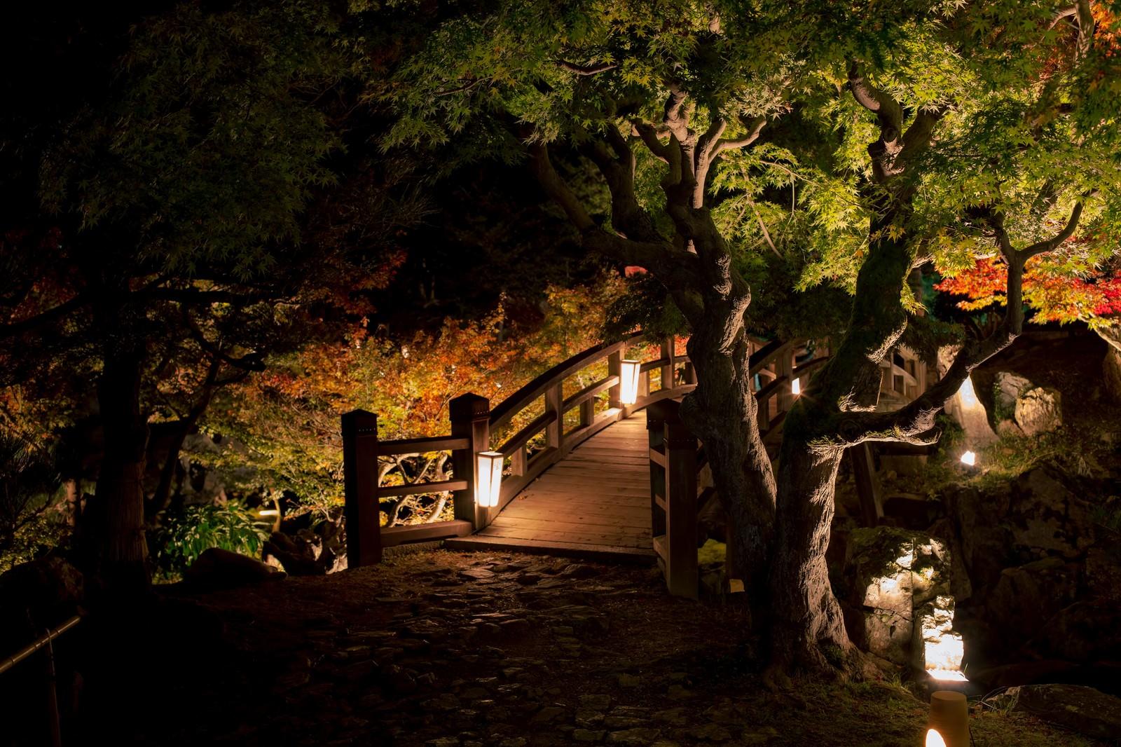 「ライトアップされた橋ライトアップされた橋」のフリー写真素材を拡大
