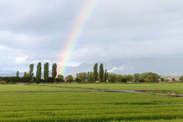 田んぼからの虹の写真