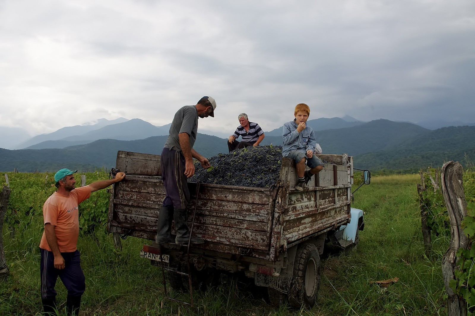 「葡萄が積載されたトラックに乗る少年」の写真