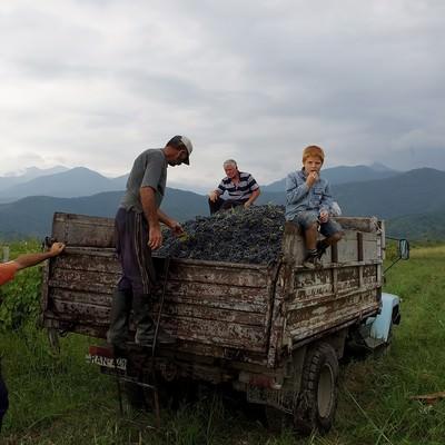 葡萄が積載されたトラックに乗る少年の写真