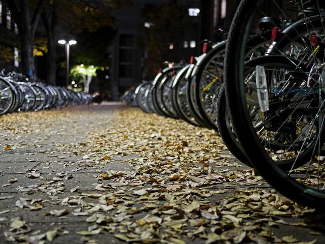 落ち葉と自転車の写真