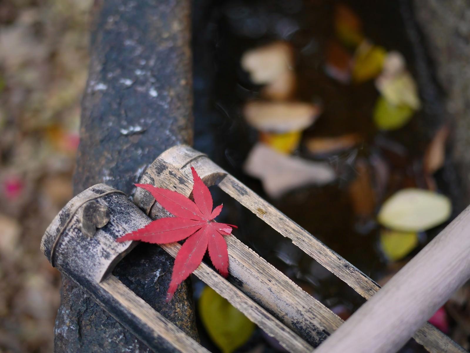 「水汲み場の紅葉一枚」の写真