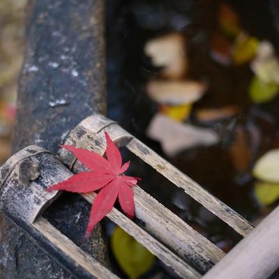 「水汲み場の紅葉一枚」の写真素材