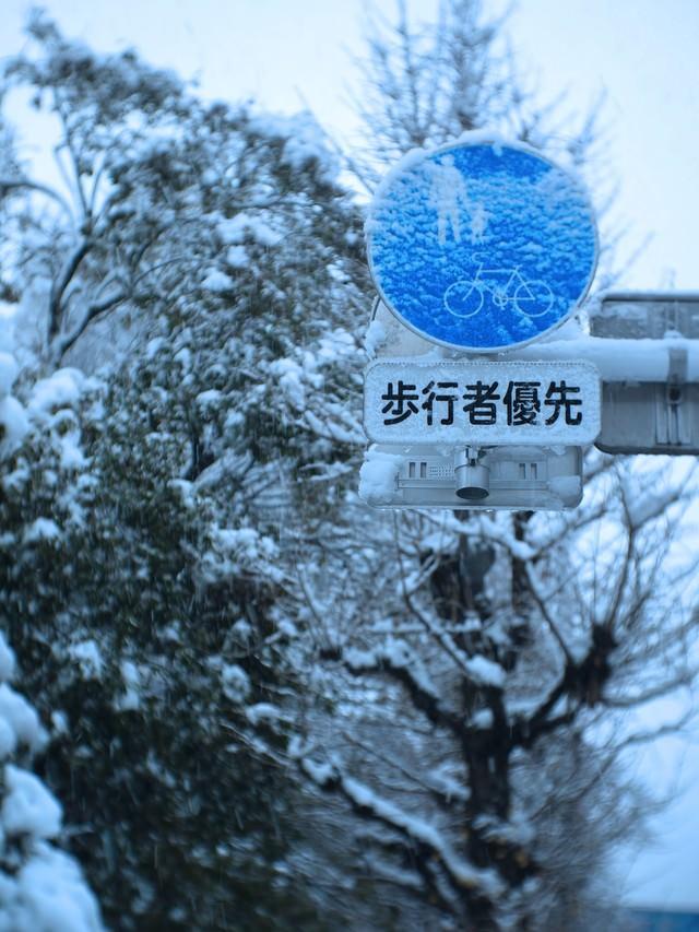 歩行者優先表示に着雪する様子の写真