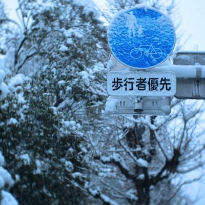 「歩行者優先表示に着雪する様子」の写真素材