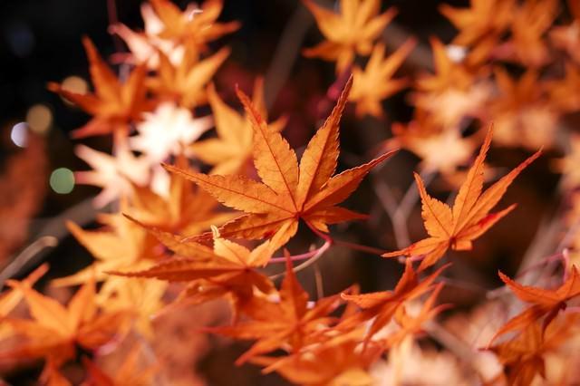 燃えるような紅葉の写真