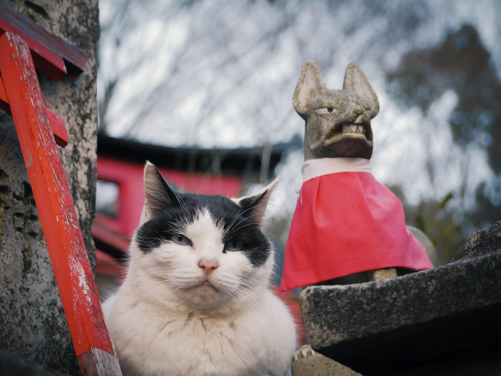 「むっとした猫むっとした猫」のフリー写真素材を拡大