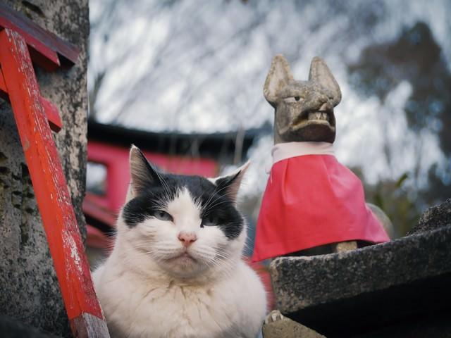むっとした猫の写真