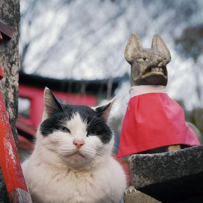 「むっとした猫」の写真素材