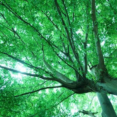 「下から見た緑の木」の写真素材