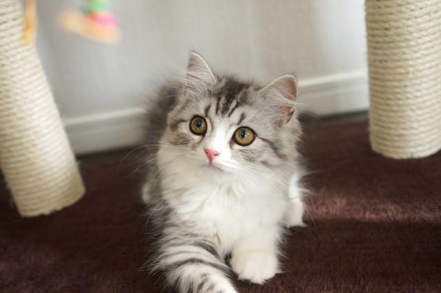 ねずみのおもちゃに興味津々の猫の写真
