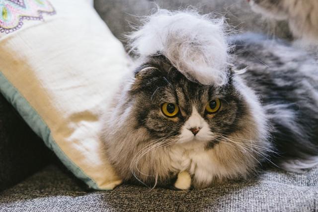 毛玉モヒカン猫の写真