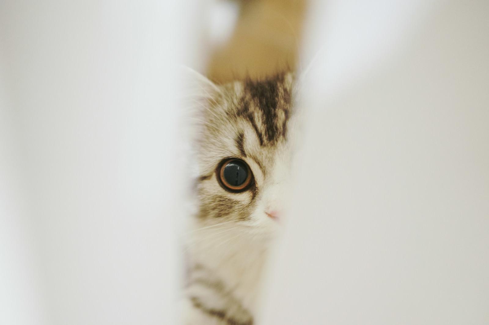 「隙間から覗き込む猫」の写真