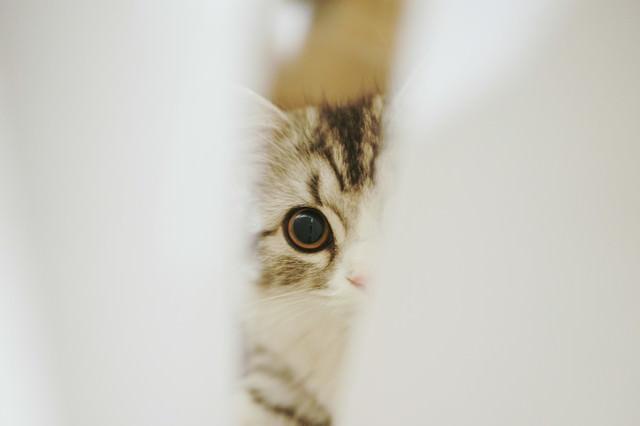 隙間から覗き込む猫の写真