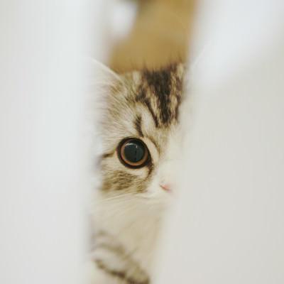 「隙間から覗き込む猫」の写真素材