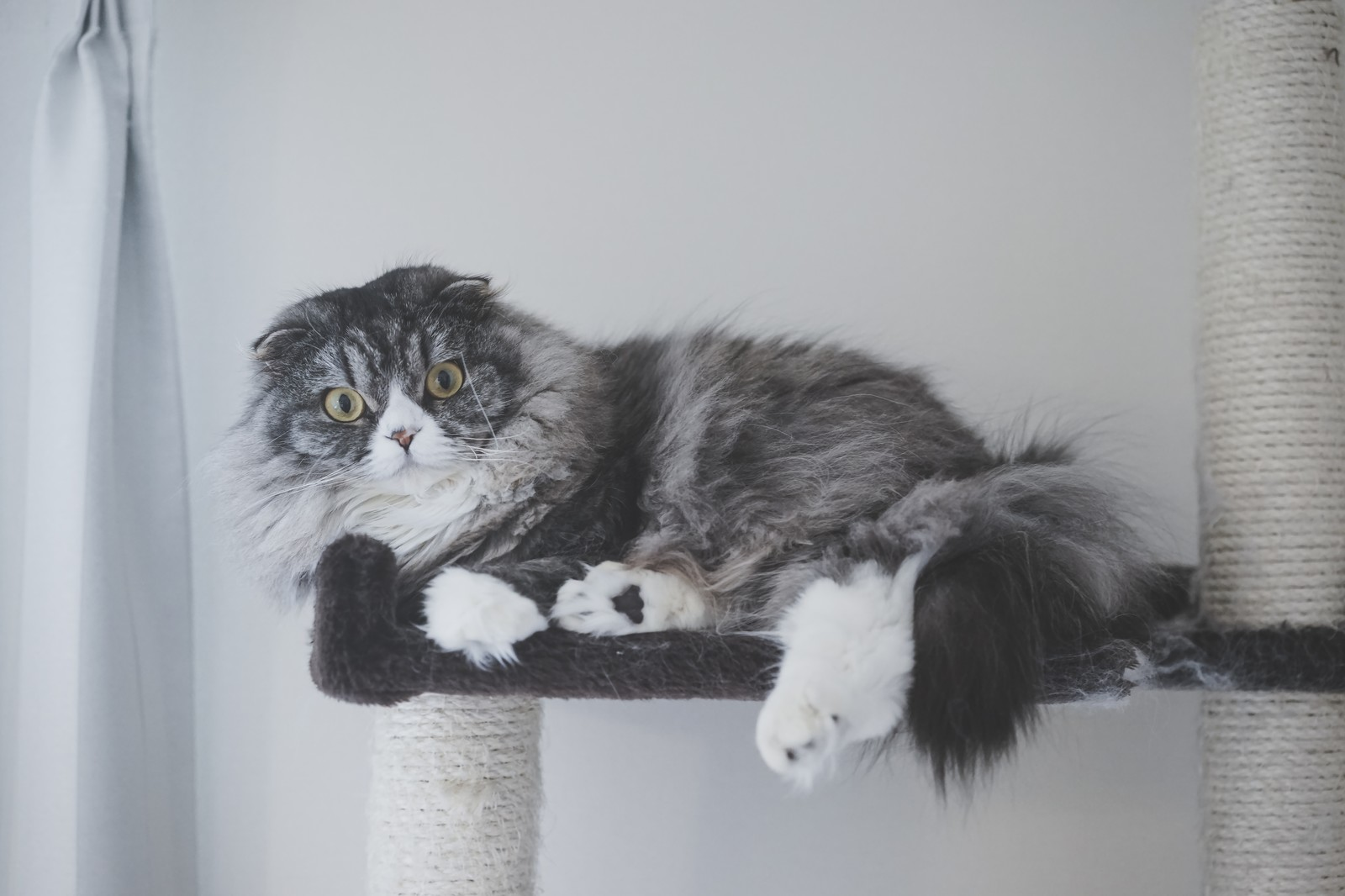 「大型のアルゴリズム変動でアフィサイトが軒並み飛んだ時(猫)」の写真