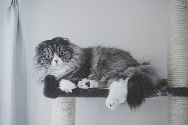 大型のアルゴリズム変動でアフィサイトが軒並み飛んだ時(猫)の写真