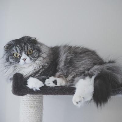 「大型のアルゴリズム変動でアフィサイトが軒並み飛んだ時(猫)」の写真素材