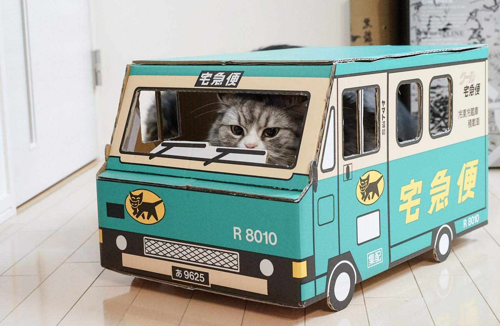 「荷物をお届けにあがりましたー(猫)」