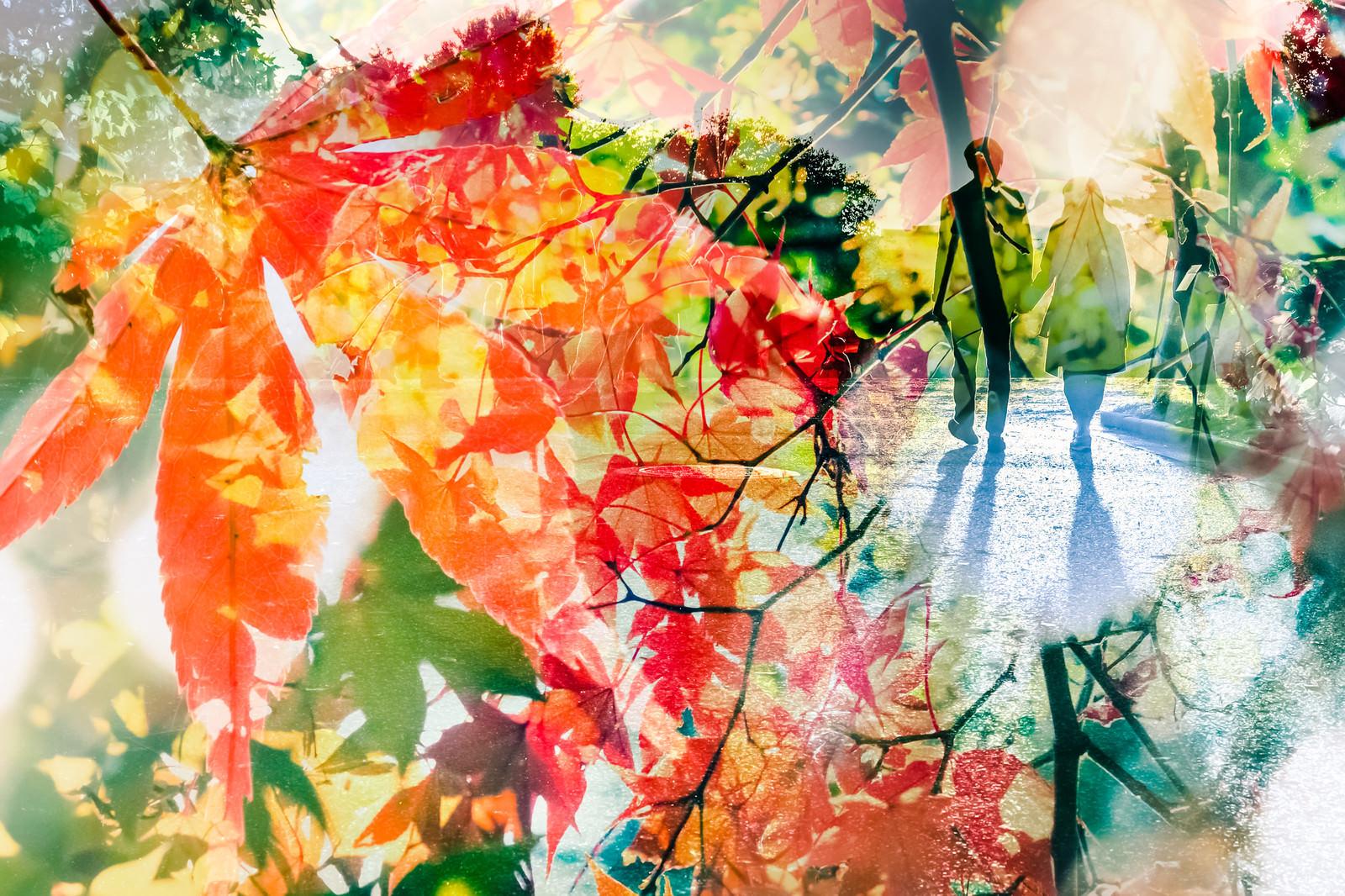 「紅葉と二人」の写真