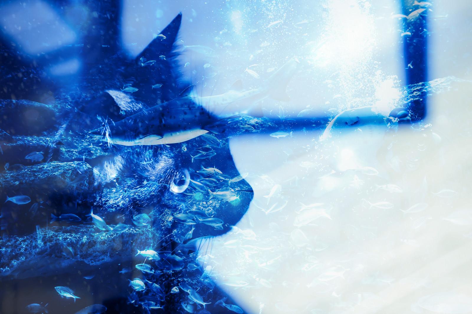 「猫の夢猫の夢」のフリー写真素材を拡大