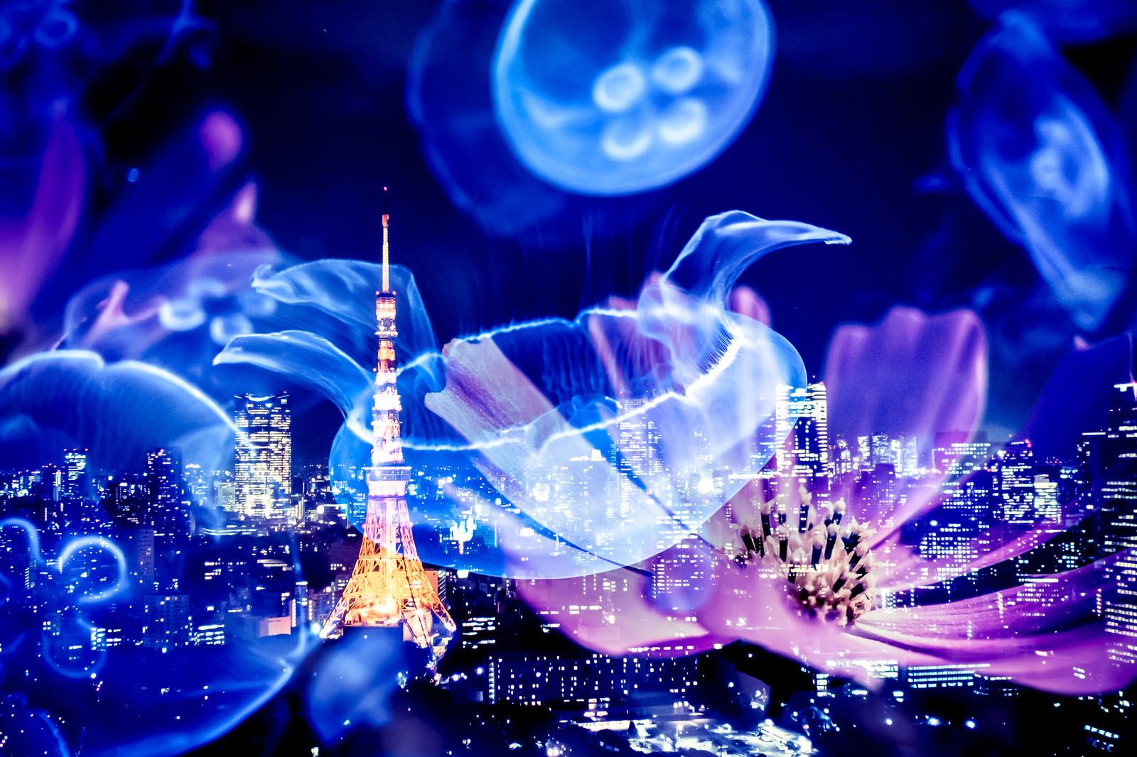 「浮かぶくらげと東京タワー」の写真