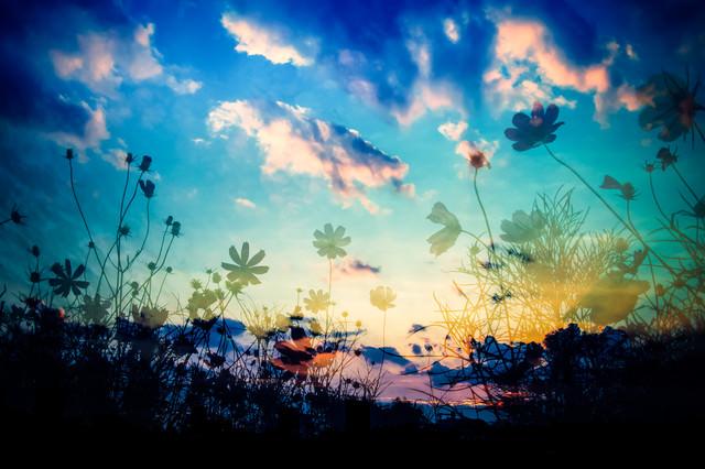 「夕映えの影」のフリー写真素材