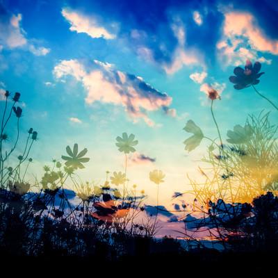 「夕映えの影」の写真素材