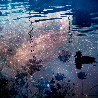 「浮かぶ鴨」の写真素材