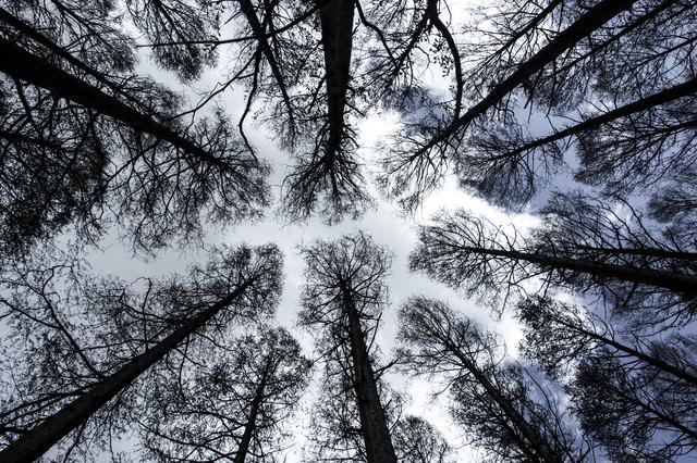 「木々を仰ぐ」のフリー写真素材