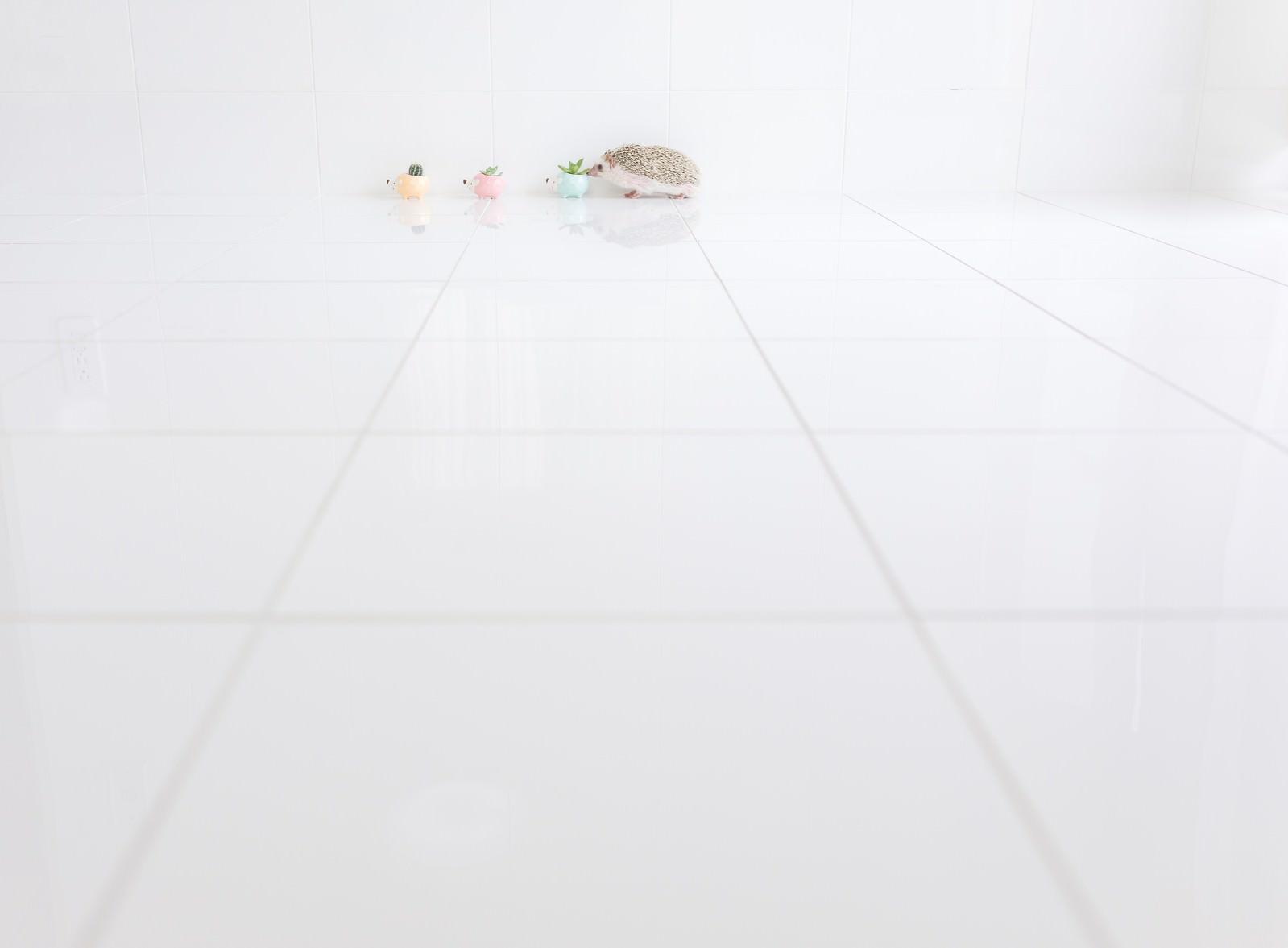 「壁沿いのハリネズミの行進」の写真