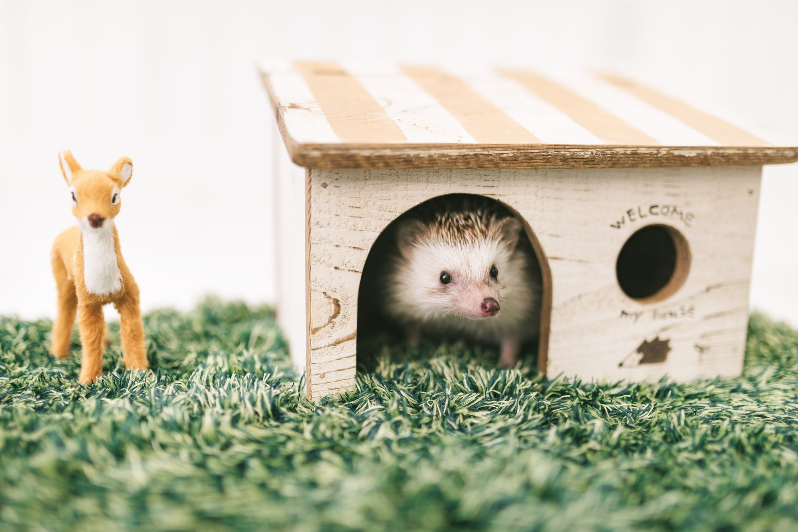 「家から顔を出すハリネズミ」の写真