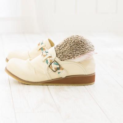 靴にすっぽり隠れるハリネズミの写真