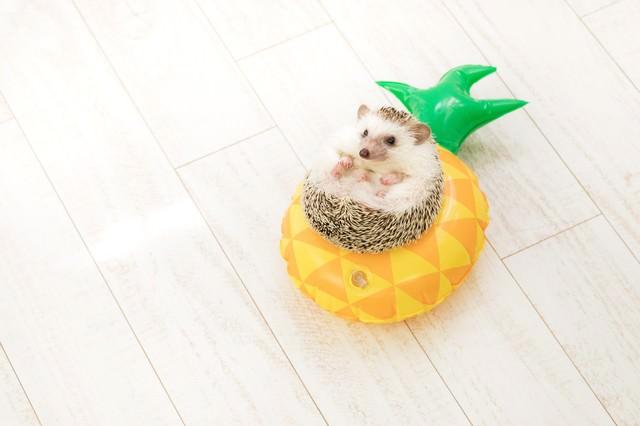 丸い浮き輪とハリネズミの写真