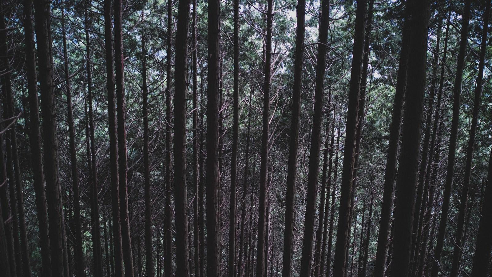 「不気味な雑木林不気味な雑木林」のフリー写真素材を拡大