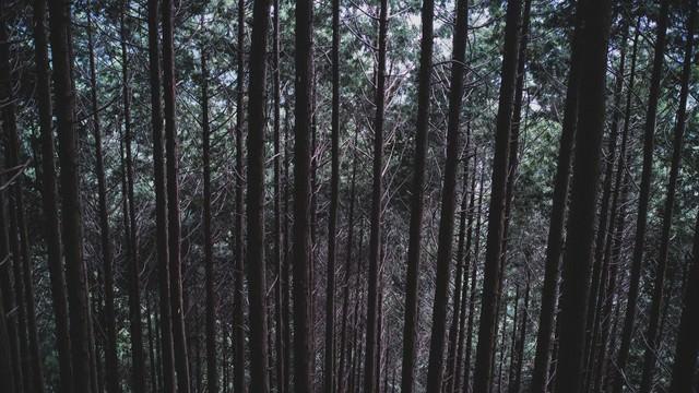 不気味な雑木林の写真