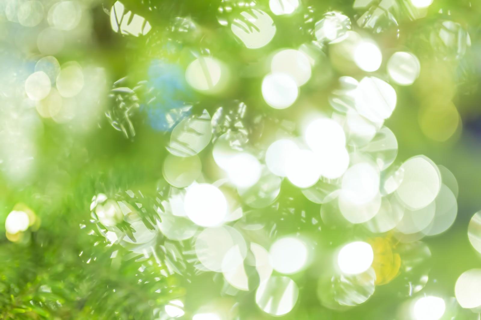 「イルミネーションとツリーイルミネーションとツリー」のフリー写真素材を拡大