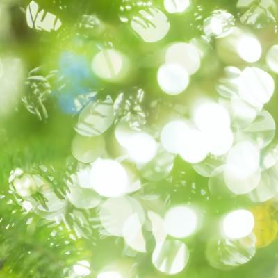 「イルミネーションとツリー」の写真素材
