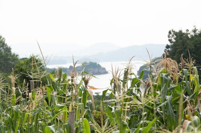 伊万里湾が見えるの写真
