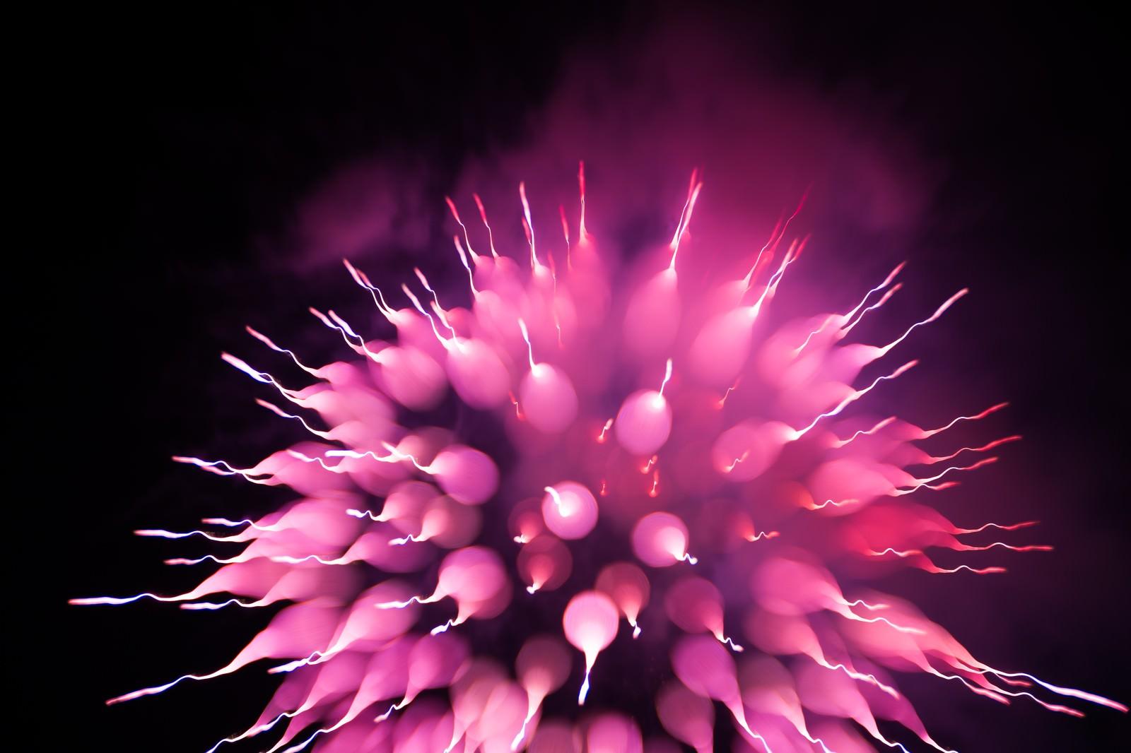 「まるで生き物、これも花火です。まるで生き物、これも花火です。」のフリー写真素材を拡大