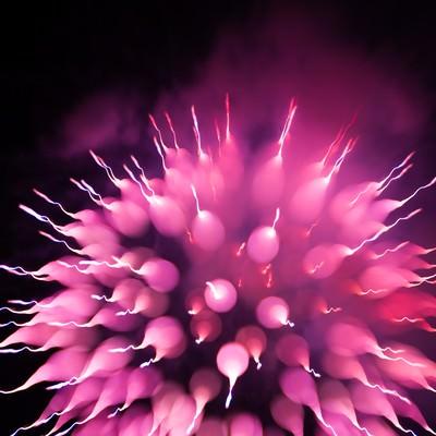 「まるで生き物、これも花火です。」の写真素材