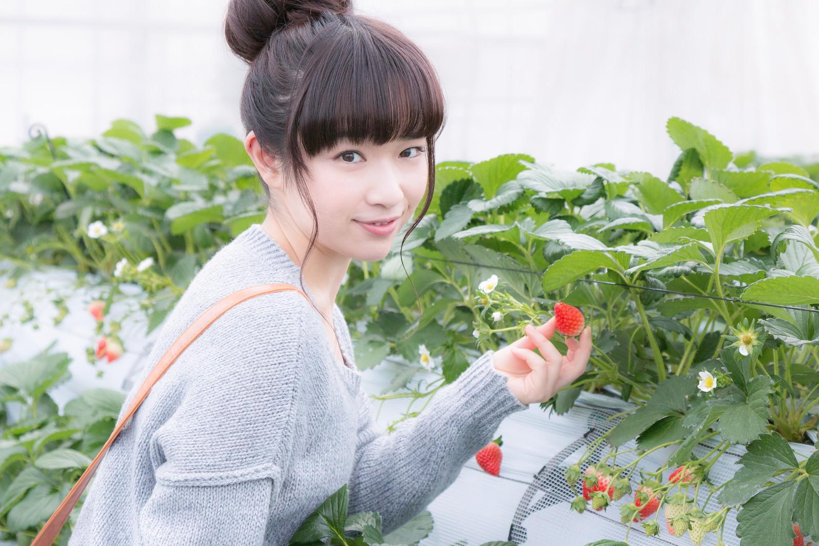 イチゴ狩りする渡辺友美子がかわいい