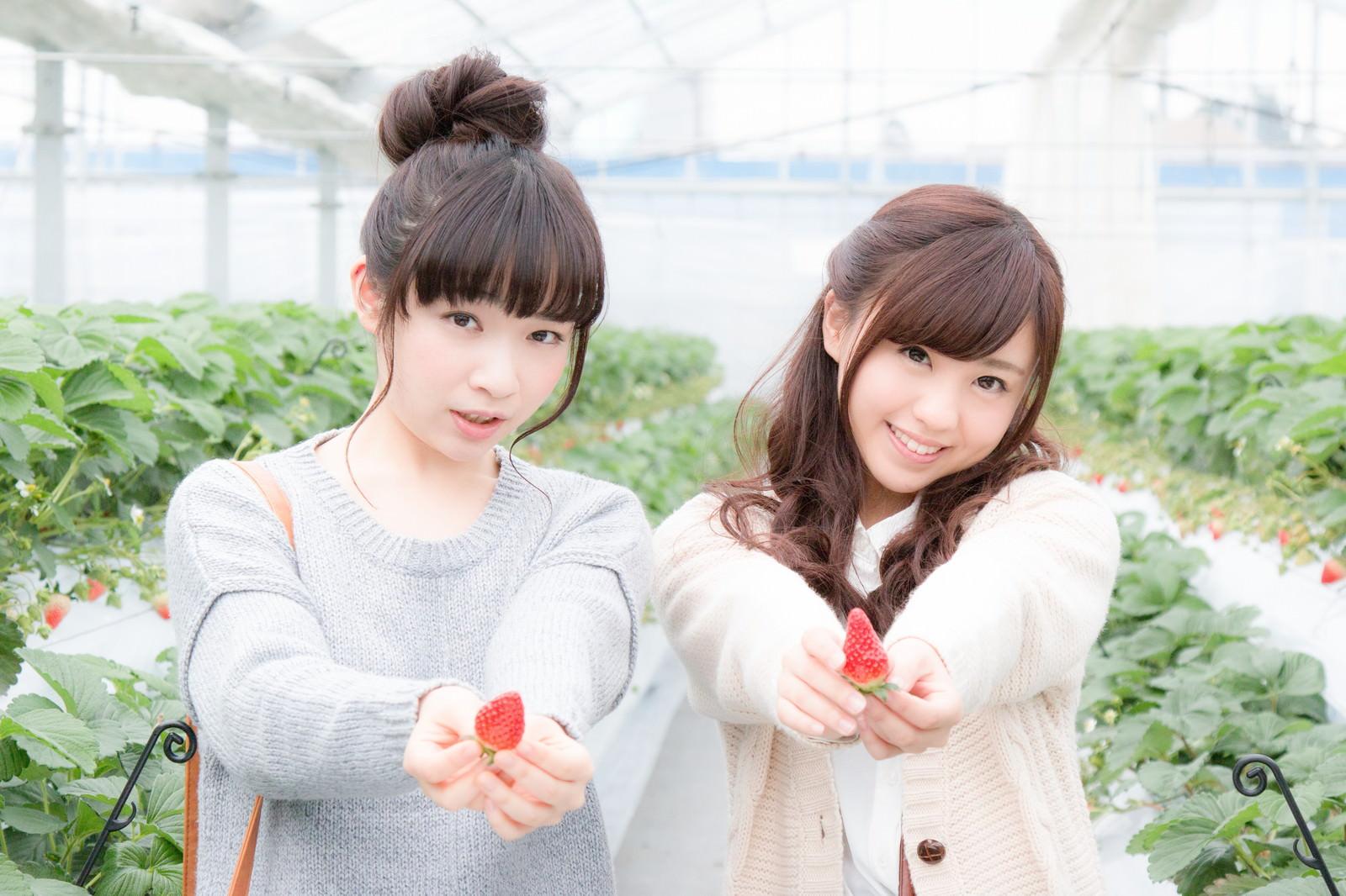 「採れたての苺をアピールする若い女性採れたての苺をアピールする若い女性」[モデル:渡辺友美子 河村友歌]のフリー写真素材を拡大
