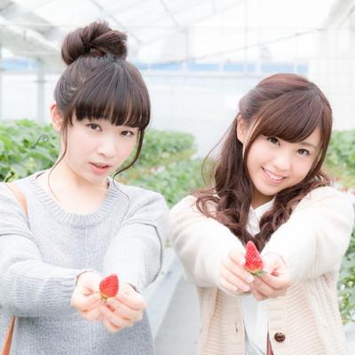 「採れたての苺をアピールする若い女性」の写真素材