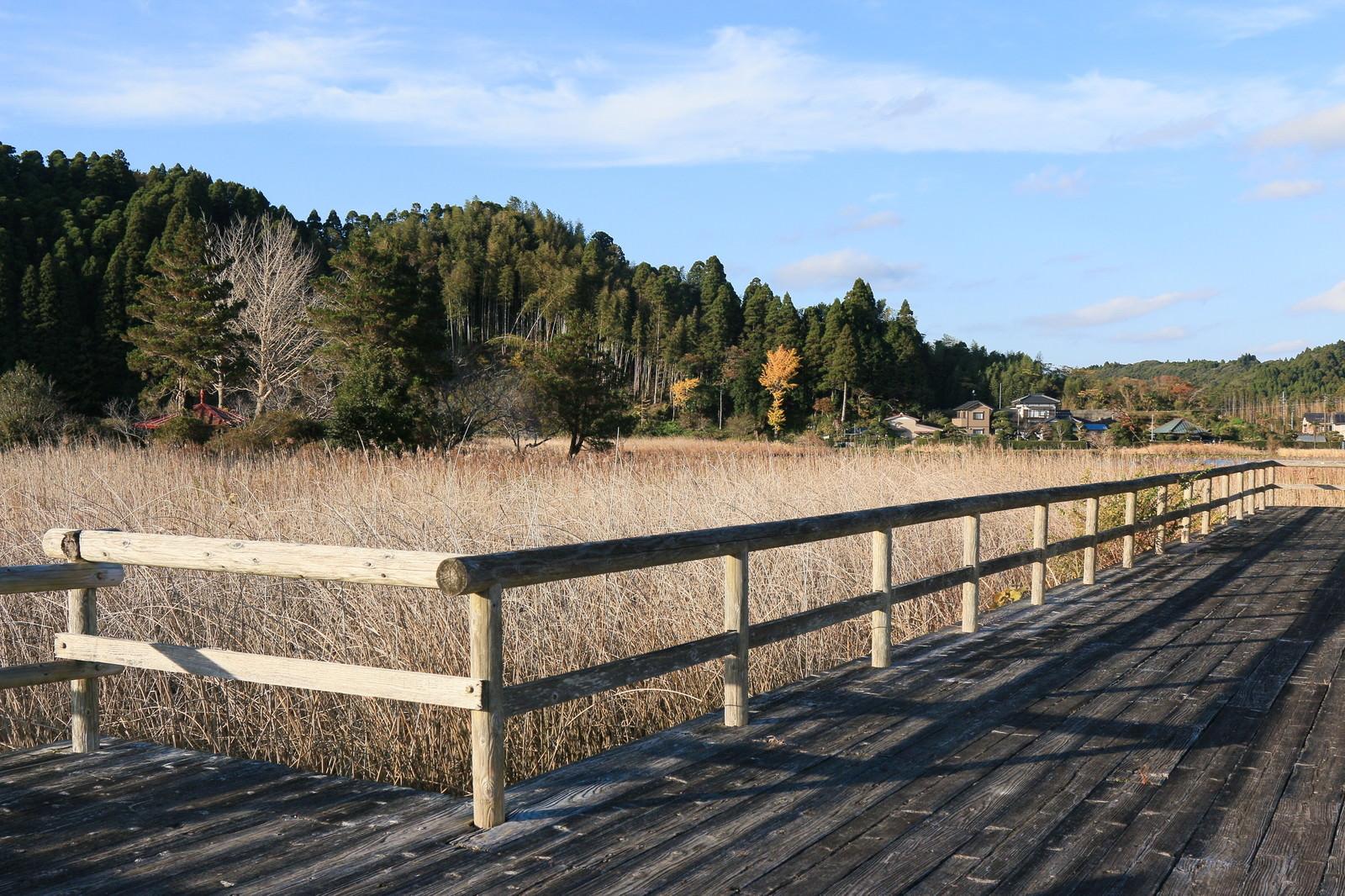 「トンボの沼の風景(冬)」の写真