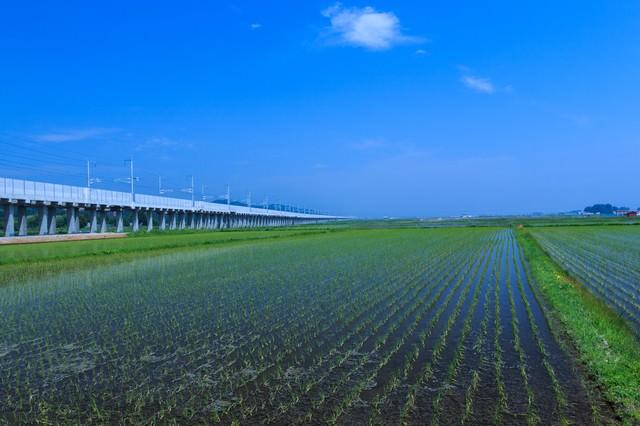 水田と高架線の写真