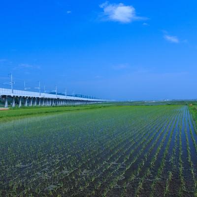 「水田と高架線」の写真素材